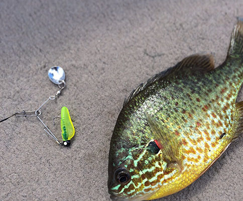 Panfish and Bait